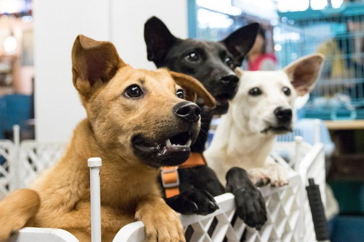 Three dogs looking at something off camera